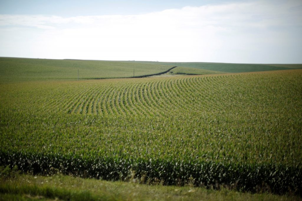 image of iowa corn field